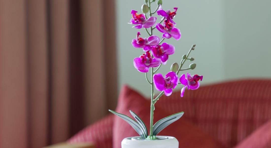 Blumengruß auf dem Zimmer im Landhotel Tirolerhof Wildschönau